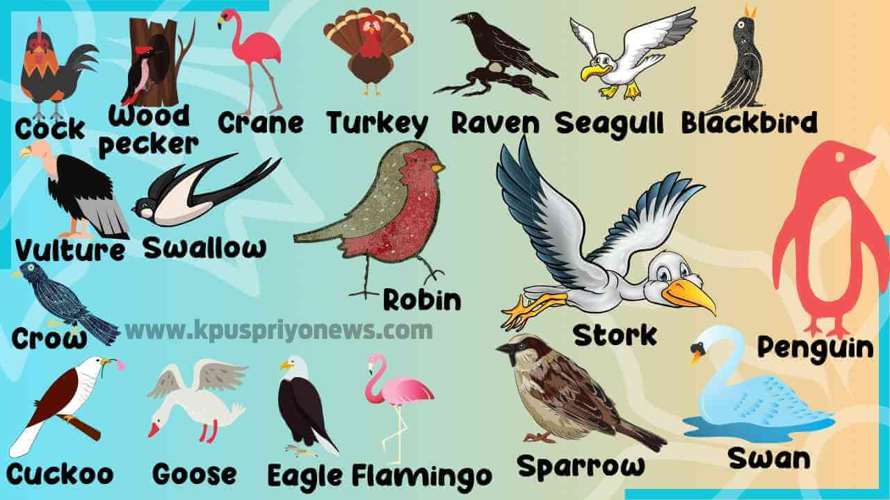 Bird-Names - List of Birds name with Birds Images