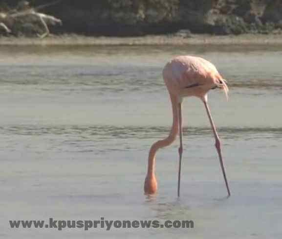 Birds name - flamingo bird