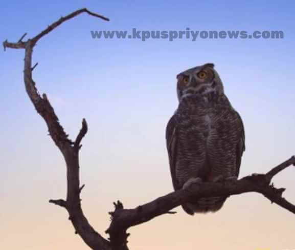Birds  name - owl bird