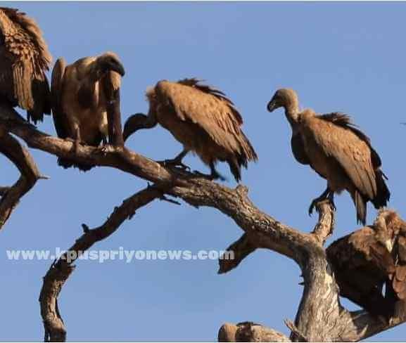 Birds name - vulture bird