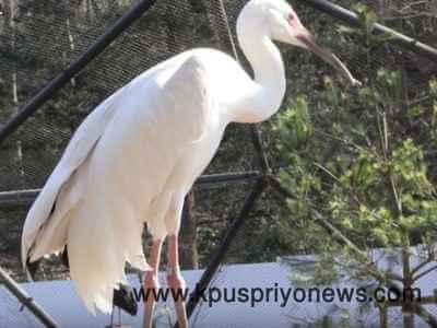 birds name - Crane bird